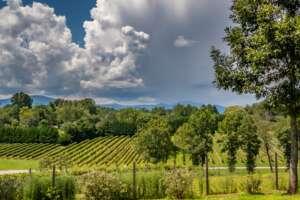 Parker-Binns Vineyard